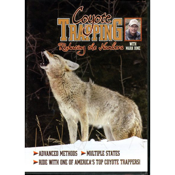 Coyote Trapping Reducing The Numbers