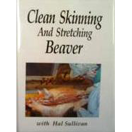 Clean Skinning And Stretching Beaver - ON CLEARANCE