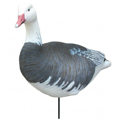 White Rock Blue Goose Collapsible Full Body 6 Pack