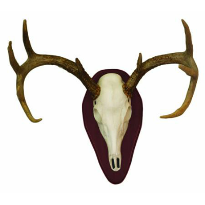 H.S. Euro Half Skull Mount = 1 Left in stock