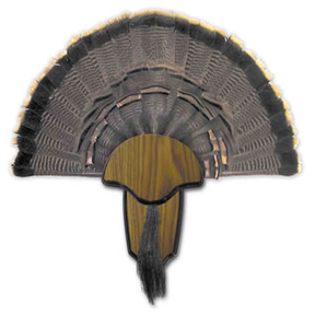 H.S. Strut® Turkey Tail & Beard Mounting Kit